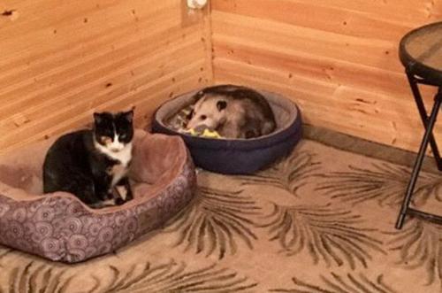 одна из кошек оказалась не кошкой