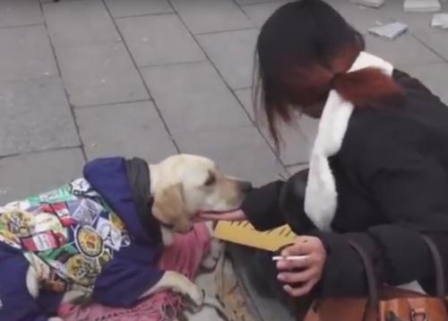 музыкант выступает с собакой