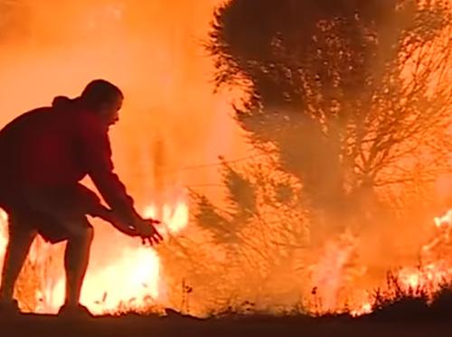 спасение кролика из огня