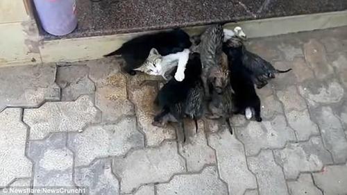 кошка кормит щенков
