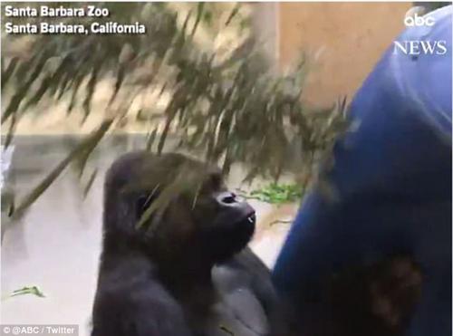 отпуск для животных в зоопарке