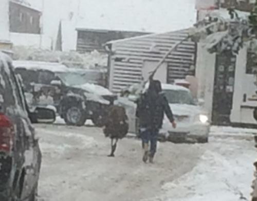 эму прогулялся по снегу