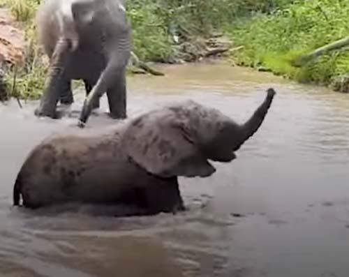 слонёнок с трудом перешёл реку
