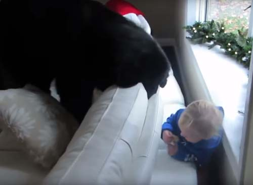 пёс играет в прятки с девочкой