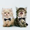 кошки на обложках альбомов