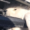 сова застряла в бампере