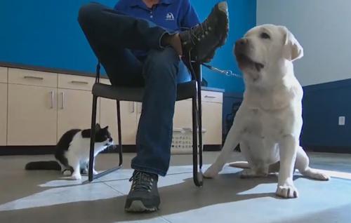 кот тренирует служебных собак