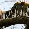 шипы против птичьего помёта