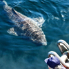 самая старая в мире акула