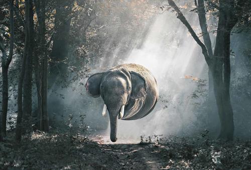 мир населённый круглыми животными
