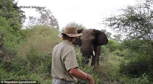 храбрый гид встретился со слоном