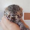 котёнок с двумя лицами
