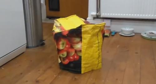 сумка двигалась по кухне
