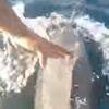 дельфин поздоровался с рыбаком