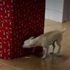лучший подарок для собак