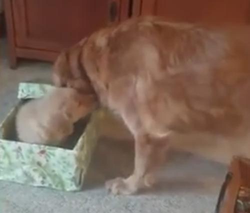особенный подарок для пса