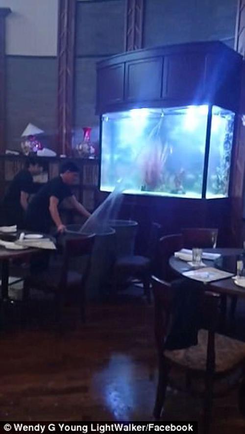 в ресторане лопнул аквариум