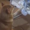 собака присматривает за малышом