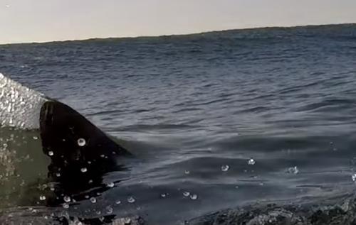 акула напугала серфера