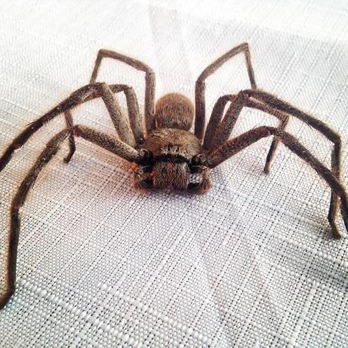 мудрые советы насчёт паука