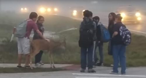 дети познакомились с оленем