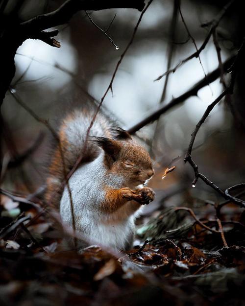 лесные звери стали фотомоделями