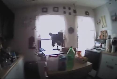 белка напала на полицейского