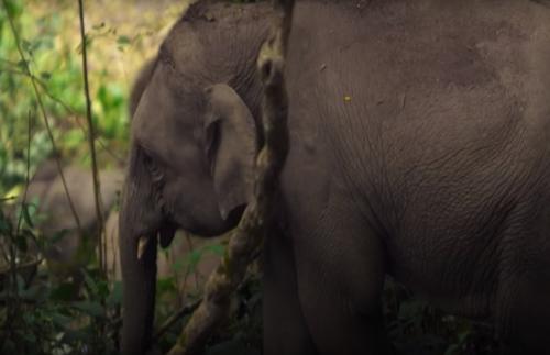 слонёнок восстанавливает здоровье
