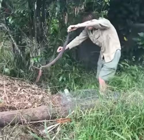 змея на заднем дворе