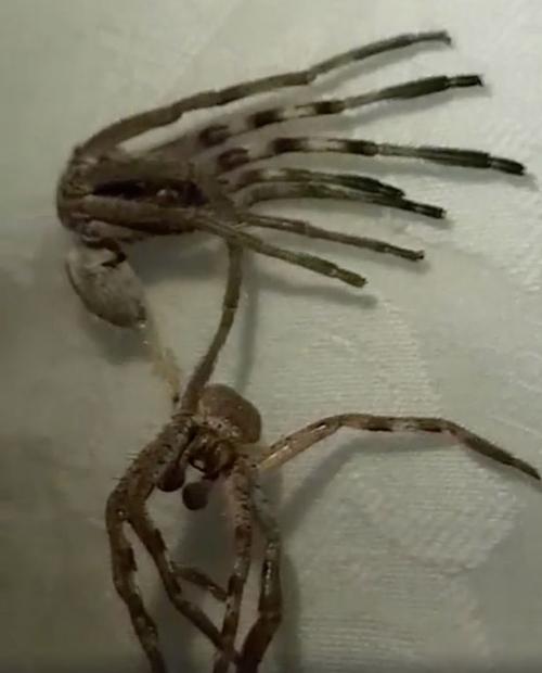 паук поменял панцирь