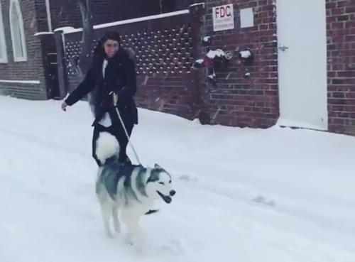 катание с помощью пса на сноуборде
