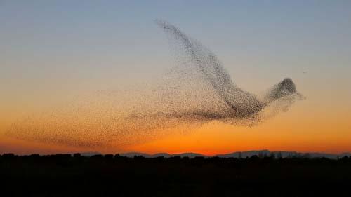 стая птиц стала похожа на птицу