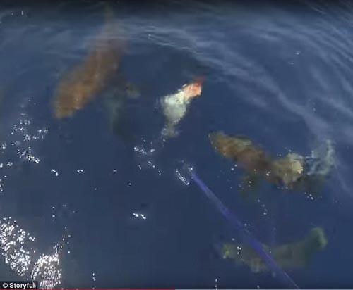 акулы лишили рыбаков улова