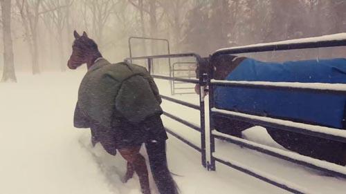 лошадям не понравилась зима