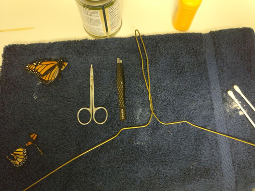 бабочка со сломанным крылом