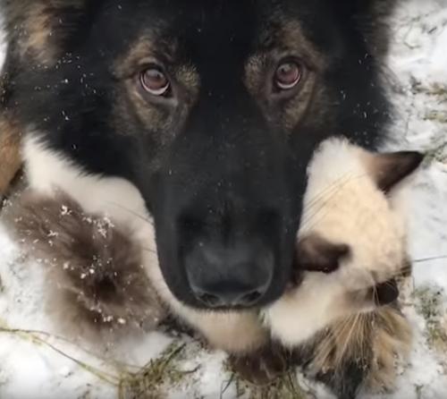 пёс защитил кота от снега