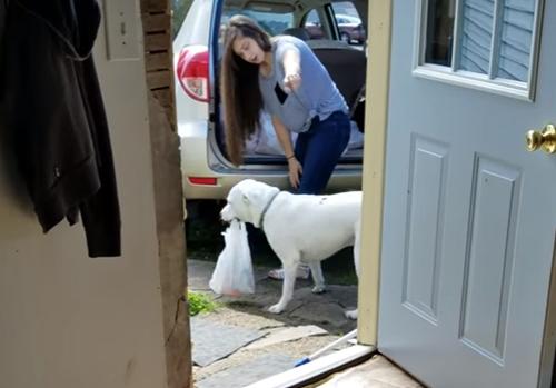 пёс научился приносить покупки