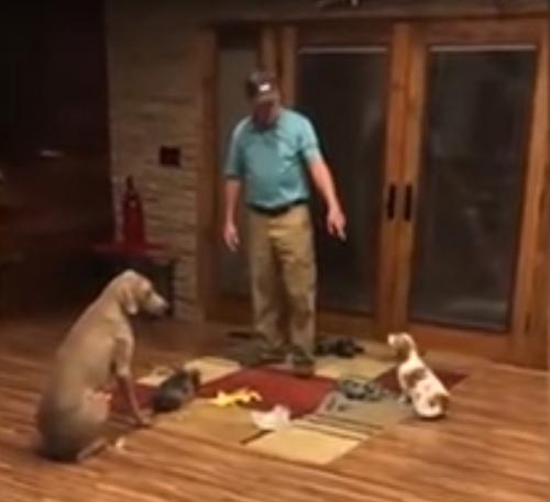 сердитая лекция для собак