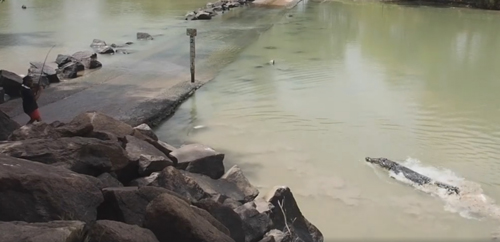 крокодил украл у рыбака улов