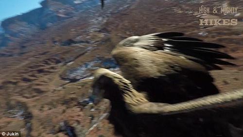 орёл сбил дрон на землю