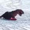 пёс скинул динозавра с санок