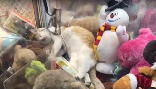 кошка в игровом автомате