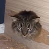 кошку замуровали в лестнице