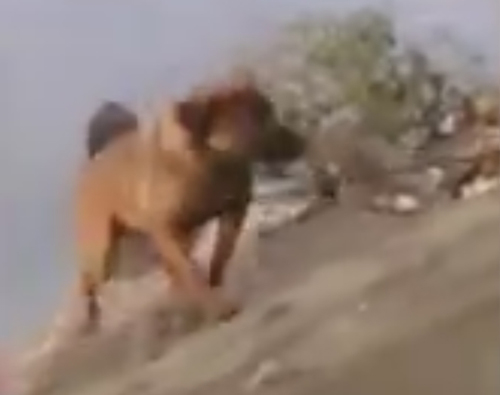 собаки в реке получили помощь