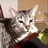 кошка не любит человеческую еду
