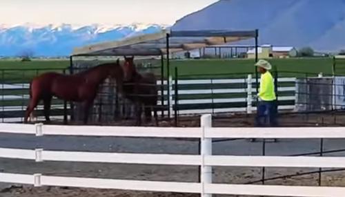лошадь попыталась помочь подруге