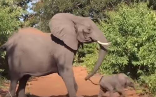 слон разгневался на туристов
