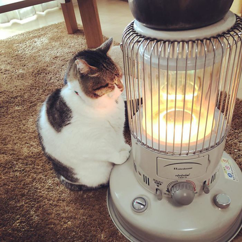 кот влюбился в обогреватель