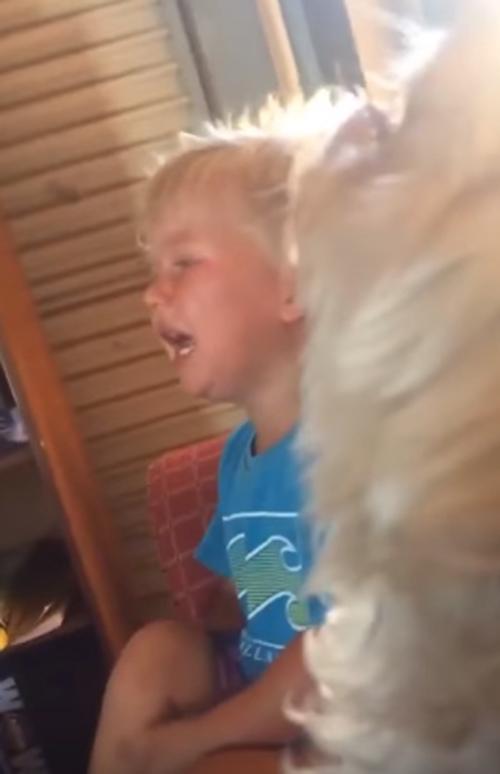 собака плачет вместе с хозяином