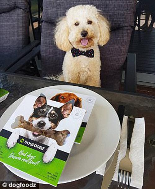 новый корм для собак